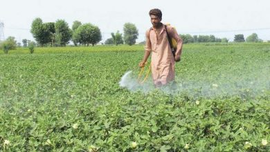 Photo of ECC approves 24 billion package for farmers