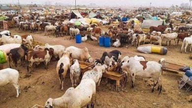 Photo of Eid ul Adha 2021: Govt announces three-day holiday on Eid