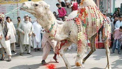 Photo of Pakistan marks Eid-ul-Adha 2021 with coronavirus safety measures