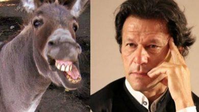 Photo of Tabdeeli: PTI govt to export donkeys to earn foreign exchange